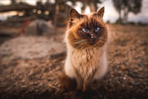 cara merawat kucing kampung agar nurut