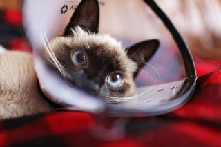 cara mengurus bayi kucing